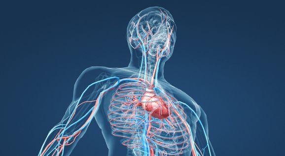 Modelización del sistema circulatorio sanguineo superior - Origen revistas medicales