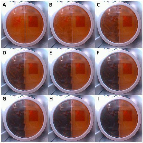 Experimento con hongos y radiaciones en la ISS - Origen NASA